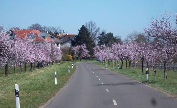 Gimmeldingen,Rhineland-Palatinate