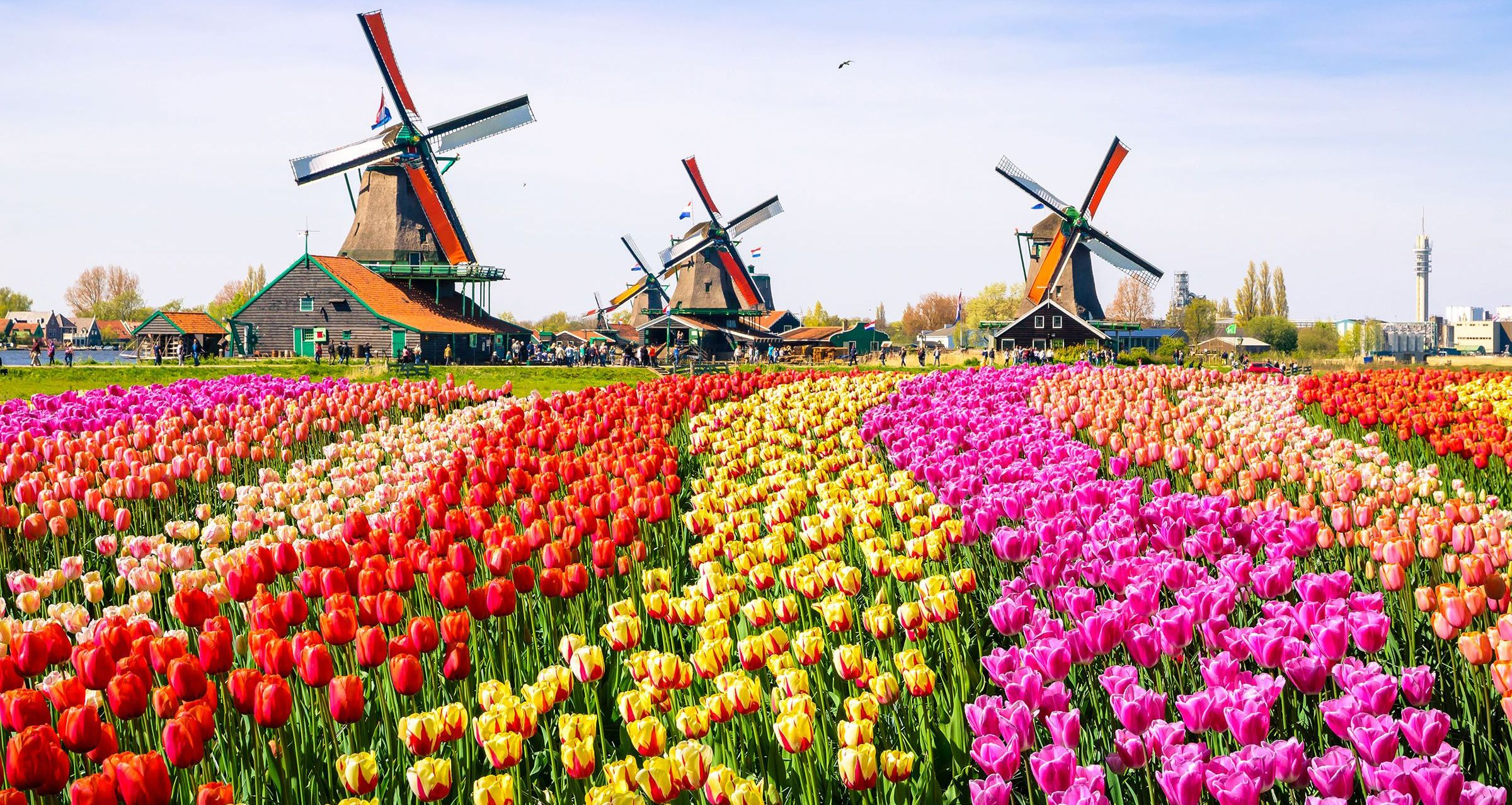 Flower fields, Netherlands