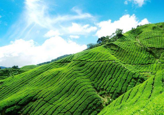 Where should I go in December in India
