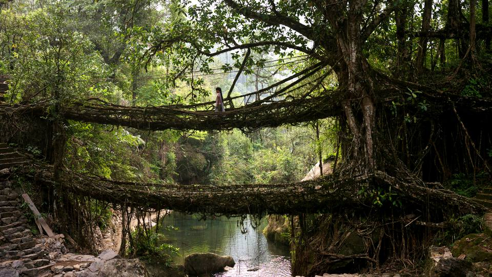 Meghalaya's Living Root Bridges